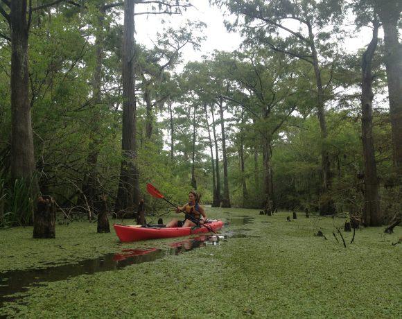 Kayak Adventure Cypress Swamp