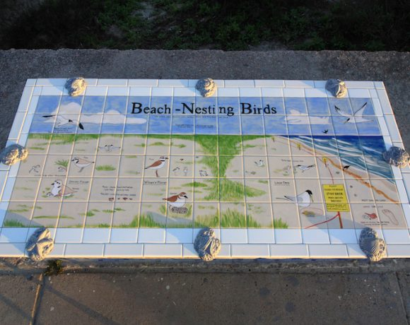 Nesting Birds of Galveston